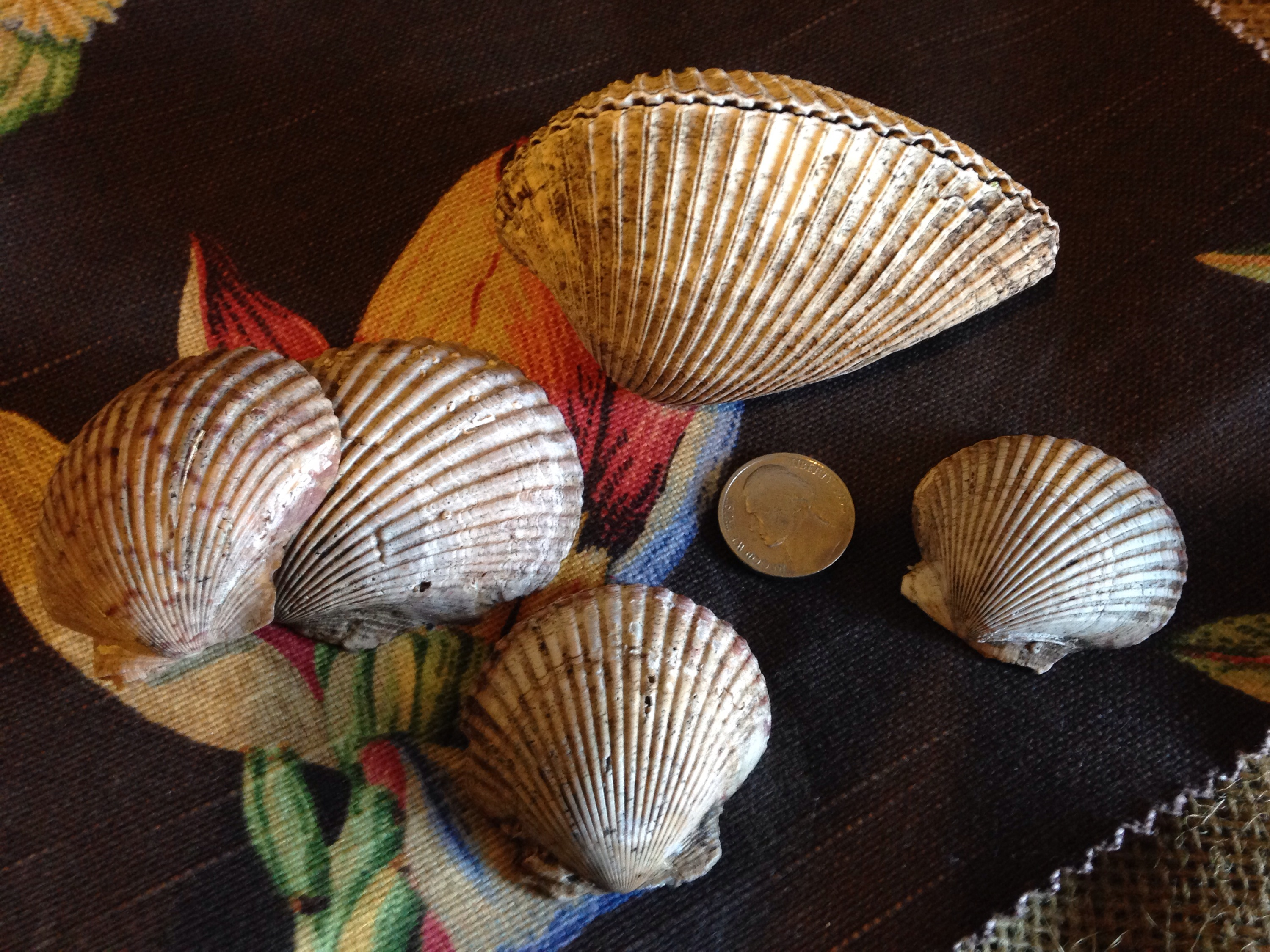 The scallop shell a symbol of pilgrimage haiku house all along the pilgrims path there are symbols of the scallop shell to indicate your going the right way biocorpaavc Image collections